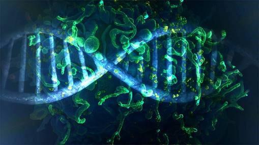 02/07/2019 - Vírus HIV é removido pela primeira vez do genoma de animais vivos